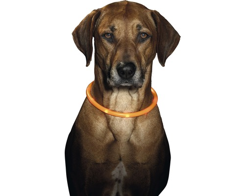 Hundhalsband KARLIE LED 70cm orange